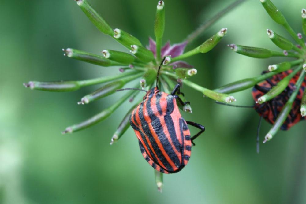 Un insecte en pleine escalade