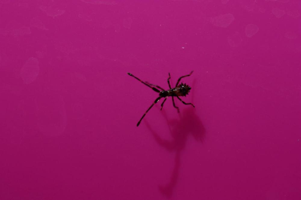Un insecte sur fond bordeaux
