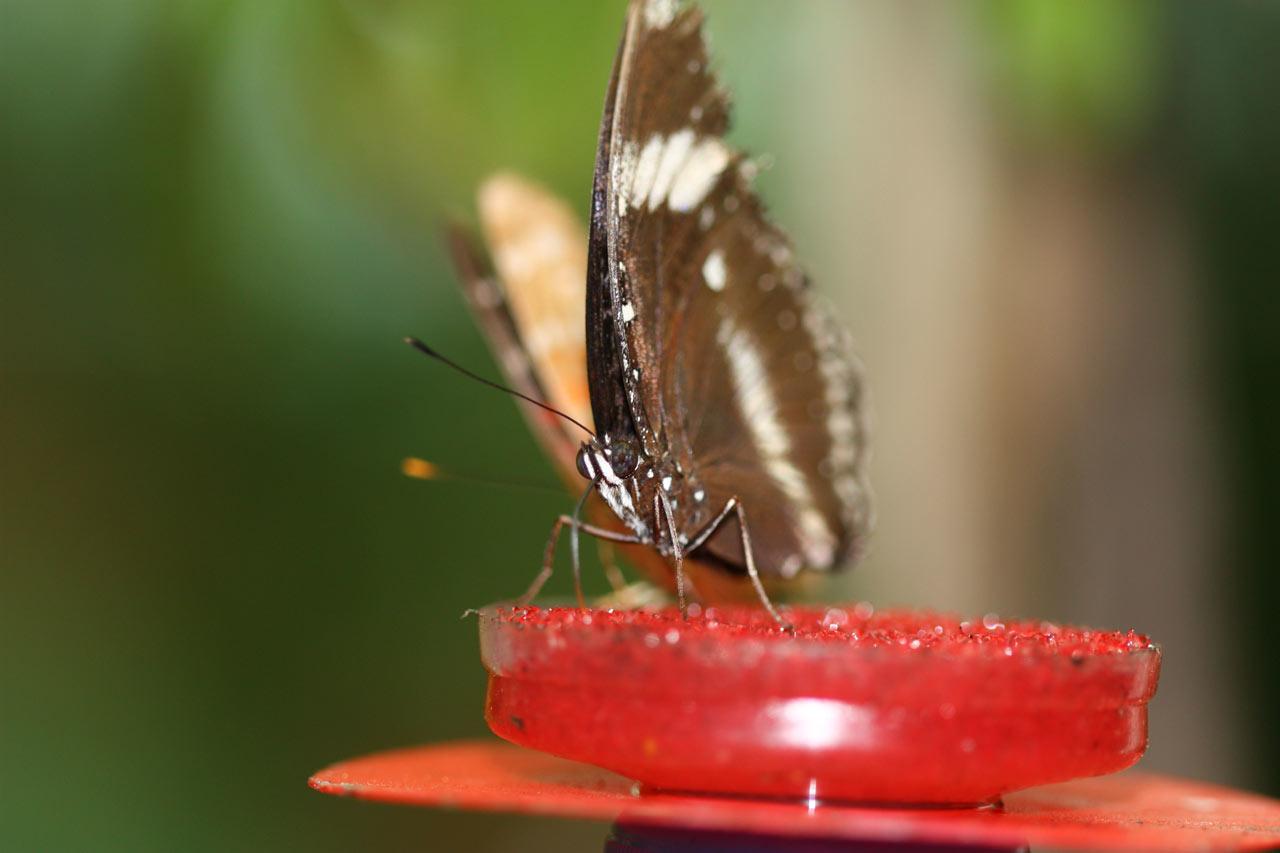 Photo de papillon vue de face