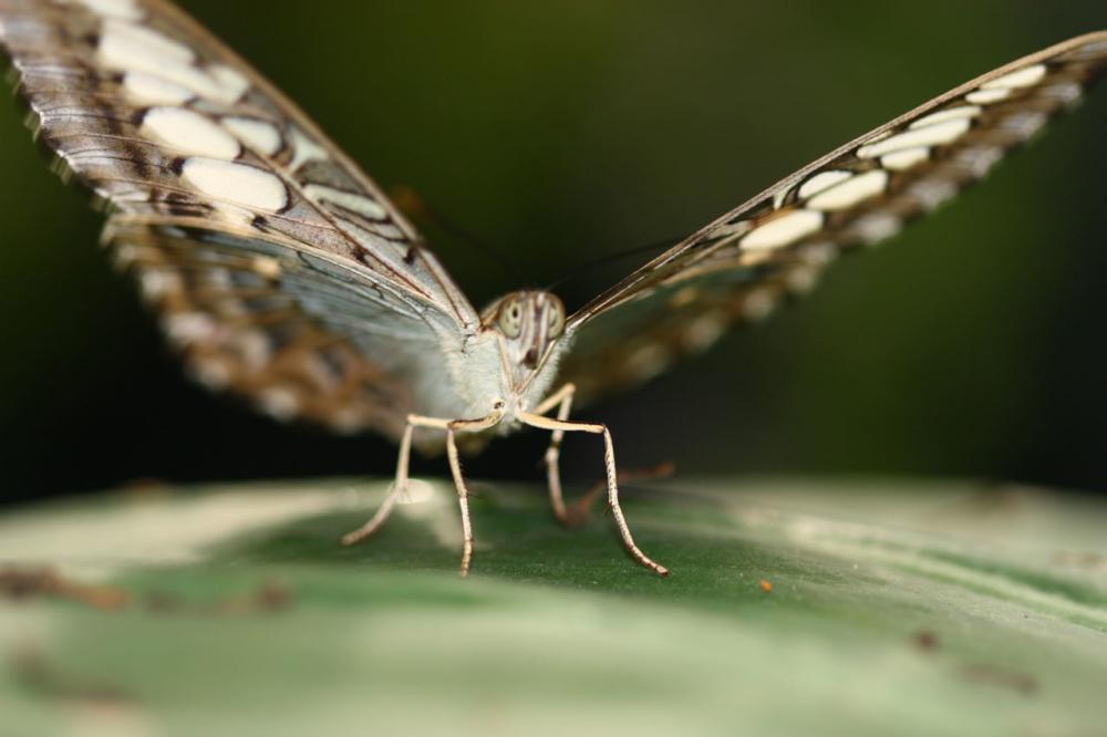 Fier papillon aux ailes ouvertes