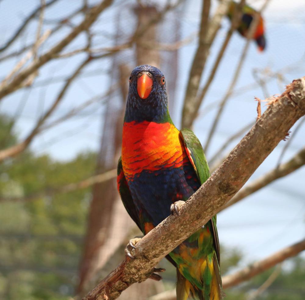 Photo d'un perroquet sur une branche
