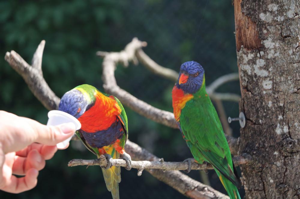 Photographie de deux perroquets