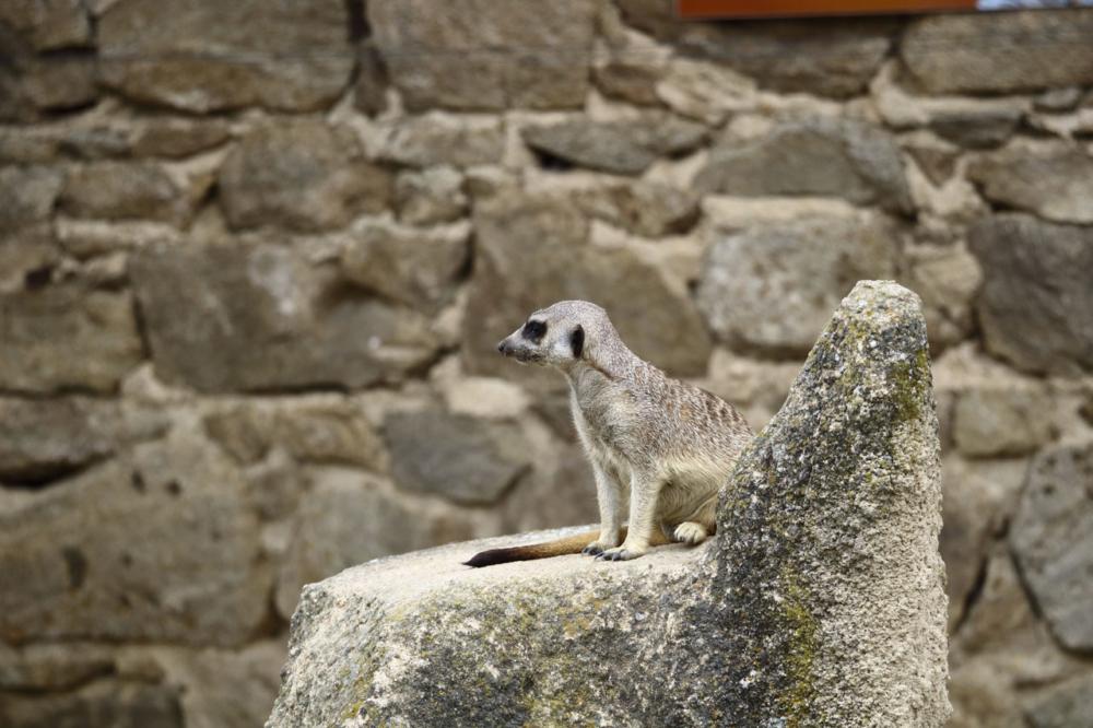 Un petit singe sur un rocher