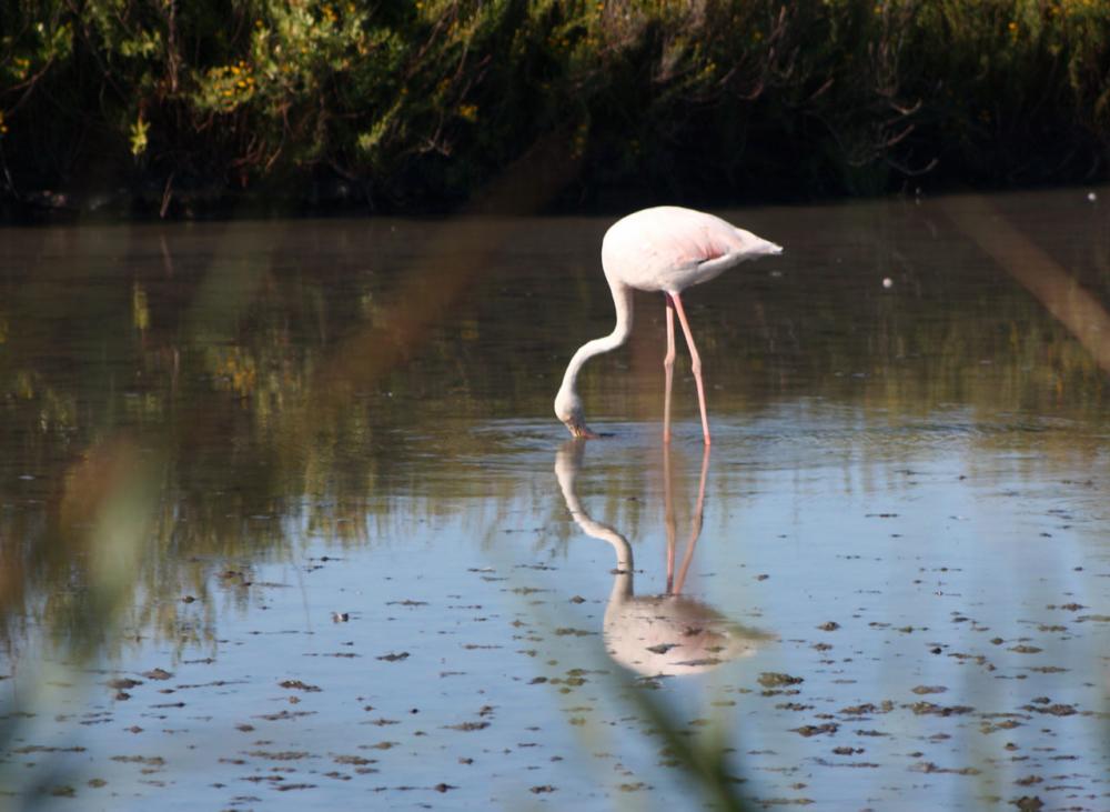 Photo d'un flamant rose dans l'eau