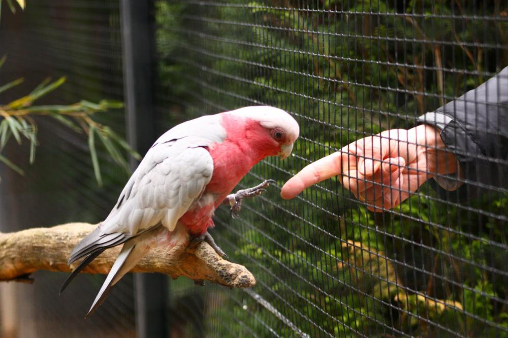 Photo d'un oiseau posant sa serre sur un doigt
