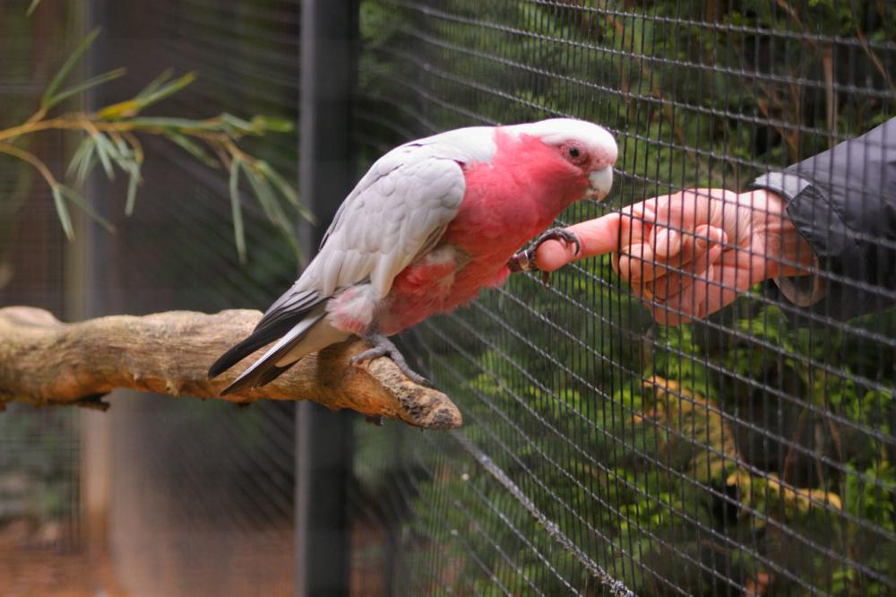 Photo rencontre d'un oiseau et d'un humain