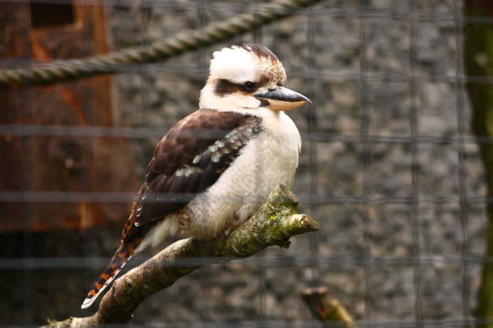 Photo d'un oiseau du Parc des Oiseaux