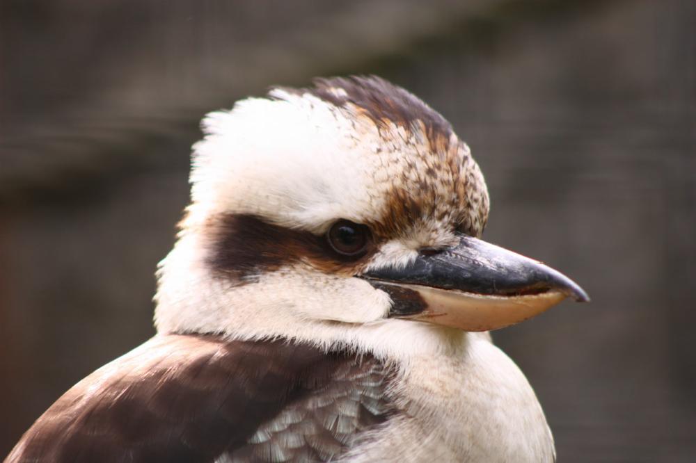 Photo portrait d'oiseau