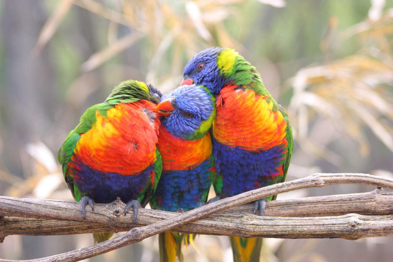 Photographie d'une famille de Perroquets