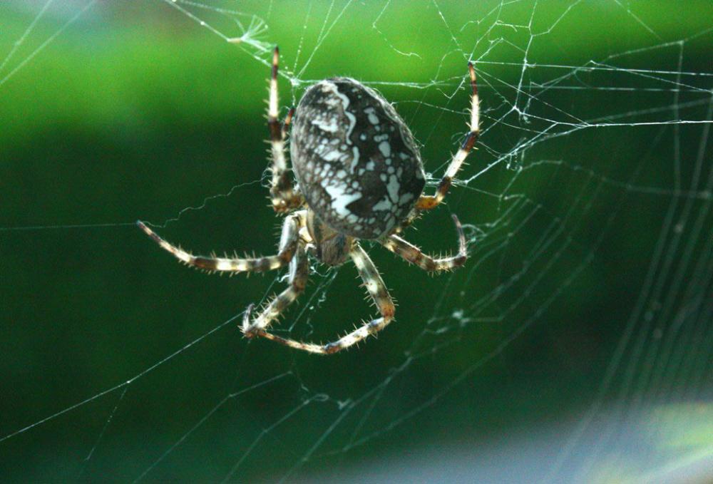 Macro d'une araignée
