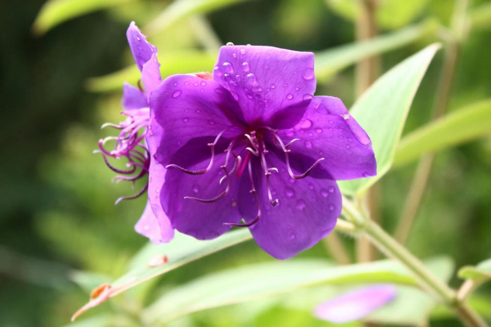Photo d'une fleur trouvée au Fontaine Pétrifiantes